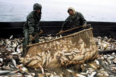 Правила рыболовства в 2017 году: где, как и чем можно рыбачить
